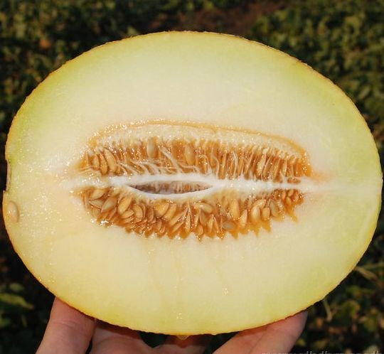 Карамель F1, семена дыни (Clause / Клоз) - фото 6498