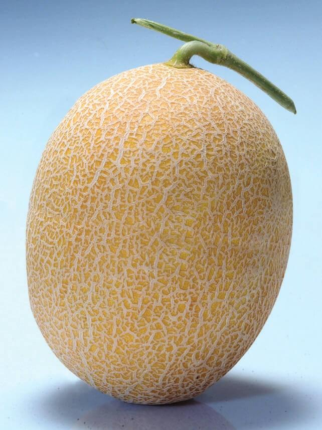 Кредо F1, семена дыни (Clause / Клоз) - фото 6499