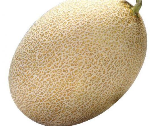 Амал F1, семена дыни (Clause / Клоз) - фото 6501