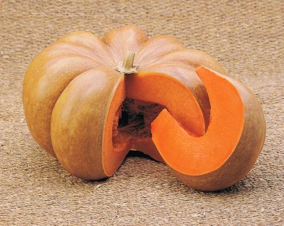 Мускатная Прованская, семена тыквы (Tezier / Тезье) - фото 6503