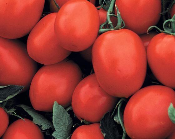 Фриско F1, семена томата детерминантного (Vilmorin / Вильморин) - фото 6508