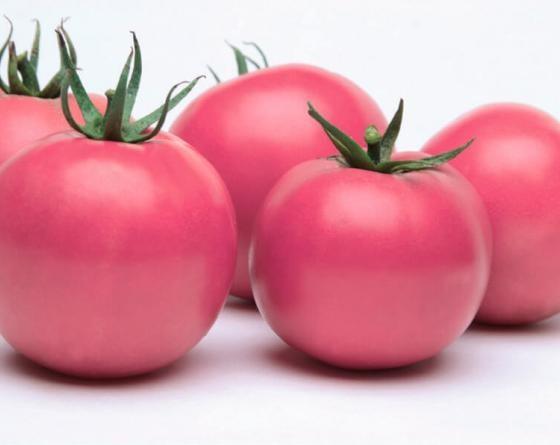 Фенда F1, семена томата (Clause / Клоз) - фото 6515
