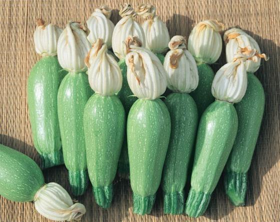 Лена F1, семена кабачка (Vilmorin / Вильморин) - фото 6520