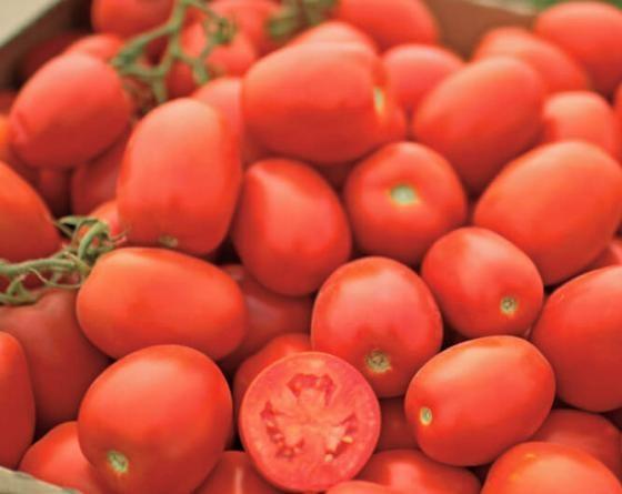 Петраросса F1, семена томата детерминантного (Clause / Клоз) - фото 6548