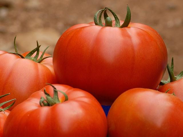 Белле F1, семена томата индетерминантного (Enza Zaden / Энза Заден) - фото 6600