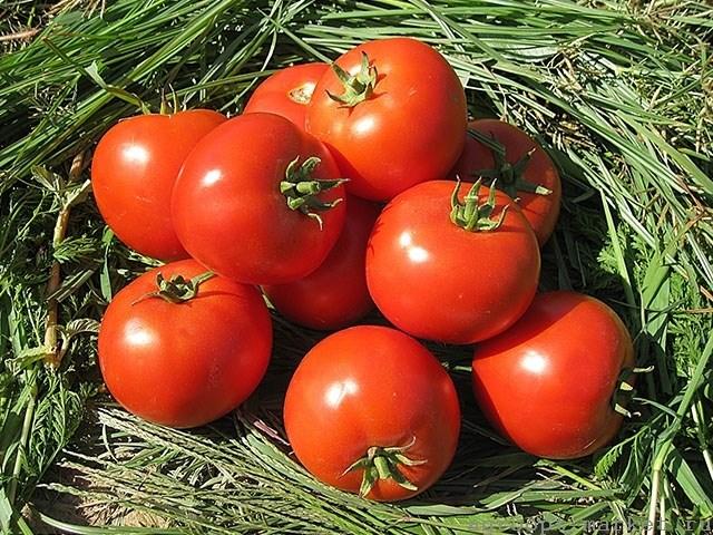 Асалет F1, семена томата детерминантного (Enza Zaden / Энза Заден) - фото 6633