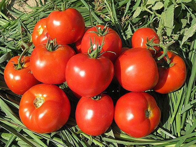 Имран F1, семена томата детерминантного (Enza Zaden / Энза Заден) - фото 6637