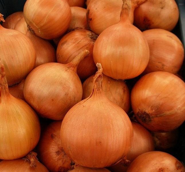 Ироко F1, семена лука репчатого (Enza Zaden / Энза Заден) - фото 6698