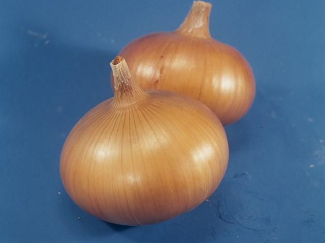 Сеншуй Йеллоу F1, семена лука репчатого (Takii Seeds / Таки Сидс) - фото 6699