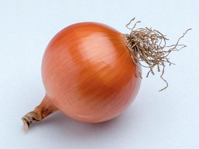 Ятоба F1, семена лука репчатого (Enza Zaden / Энза Заден) - фото 6704