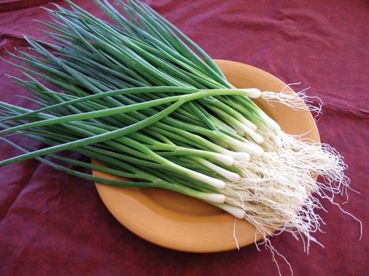 Тайкун F1, семена лука на перо (Takii Seeds/ Таки Сидс) - фото 6728