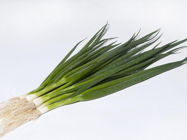 Эстафет F1, семена лука на перо (Takii / Таки) - фото 6731