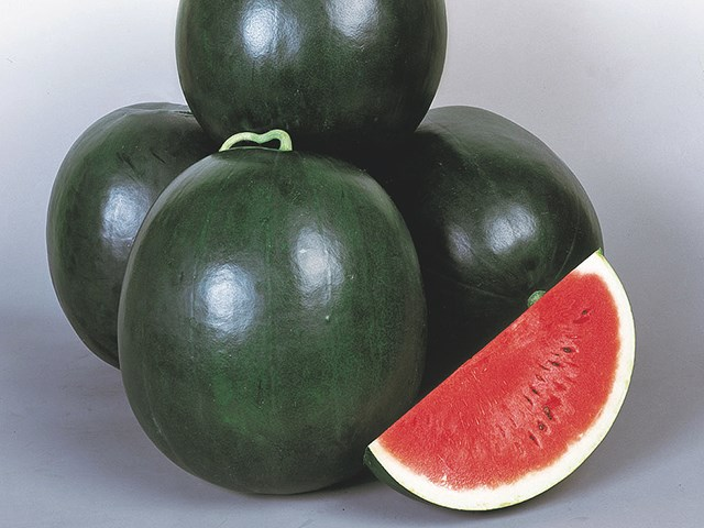 Дулзор F1, семена арбуза (Takii Seeds / Таки Сидс) - фото 6743