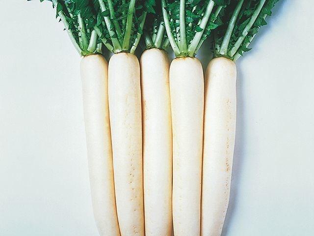 Эприл Крос F1, семена дайкона (Takii Seeds / Таки Сидс) - фото 6794
