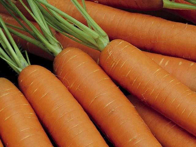 TI-134 F1, семена моркови (Takii Seeds / Таки Сидс) - фото 6818