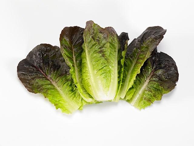 Мунред, семена салата ромэн (Enza Zaden / Энза Заден) - фото 6860