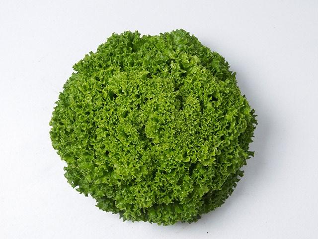 Илема, семена салата лолло бионда (Enza Zaden / Энза Заден) - фото 6888