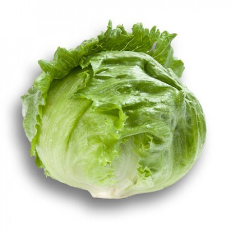 Рубетт РЗ, семена салата айсберг (Rijk Zwaan / Райк Цваан) - фото 6910