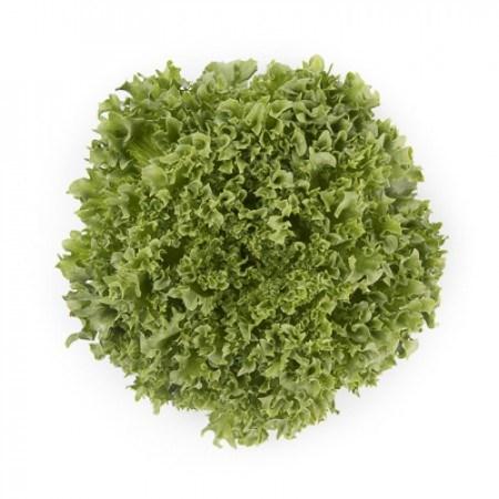 Лалик, семена салата айсберг (Rijk Zwaan / Райк Цваан) - фото 6944