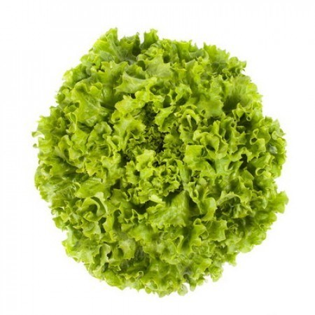Отили, семена салата батавия (Rijk Zwaan / Райк Цваан) - фото 6959