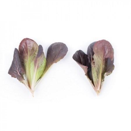 Бойд, семена салата ромэн (Rijk Zwaan / Райк Цваан) - фото 6961