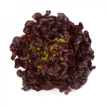 Роксай, семена салата дуболистного (Rijk Zwaan / Райк Цваан) - фото 6976