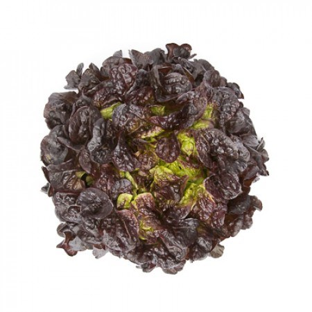Сатудай, семена салата дуболистного (Rijk Zwaan / Райк Цваан) - фото 6979