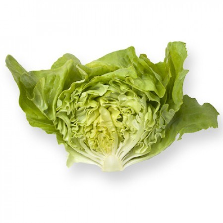 Санторо, семена салата кочанного маслянистого (Rijk Zwaan / Райк Цваан) - фото 6982