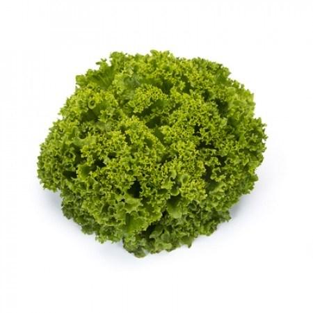 Ландау, семена салата лолло бионда (Rijk Zwaan / Райк Цваан) - фото 6992