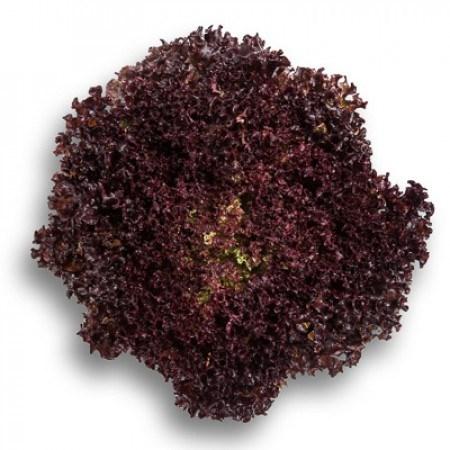Сенсибель, семена салата листового (Rijk Zwaan / Райк Цваан) - фото 7006
