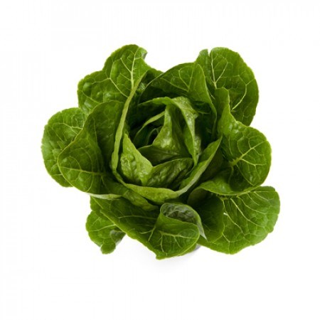 Рафаэль, семена салата ромэн (Rijk Zwaan / Райк Цваан) - фото 7033