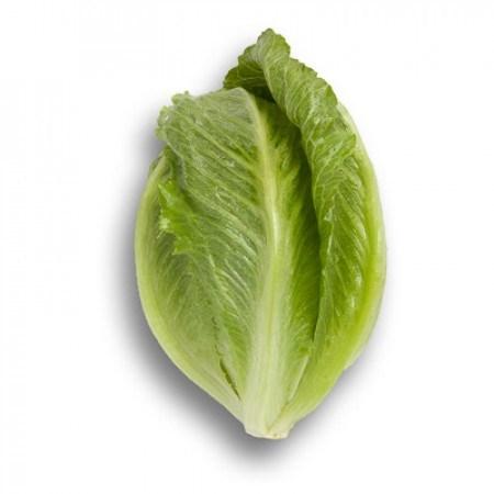 Кранчита, семена салата ромэн (Rijk Zwaan / Райк Цваан) - фото 7040
