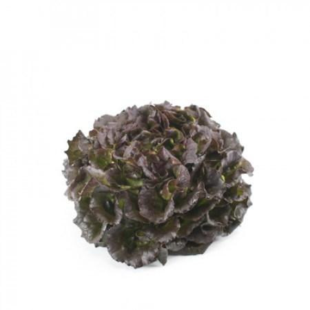Бобал, семена салата саланова (Rijk Zwaan / Райк Цваан) - фото 7046