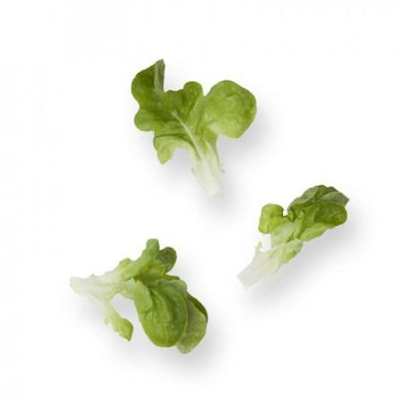 Кук, семена салата дуболистного (Rijk Zwaan / Райк Цваан) - фото 7053