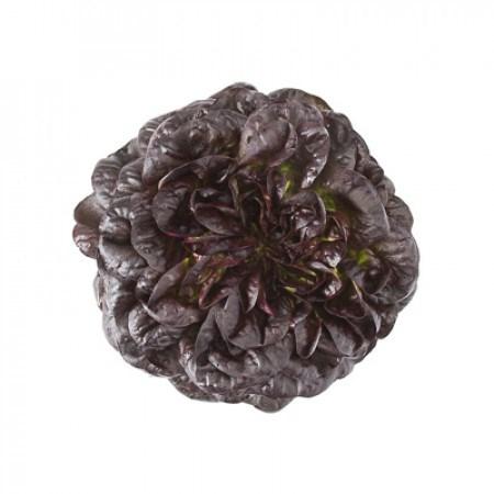 Барлах, семена салата дуболистного (Rijk Zwaan / Райк Цваан) - фото 7063