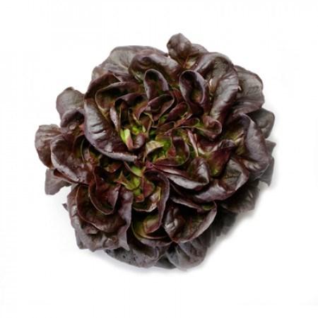 Гоген, семена салата дуболистного (Rijk Zwaan / Райк Цваан) - фото 7066
