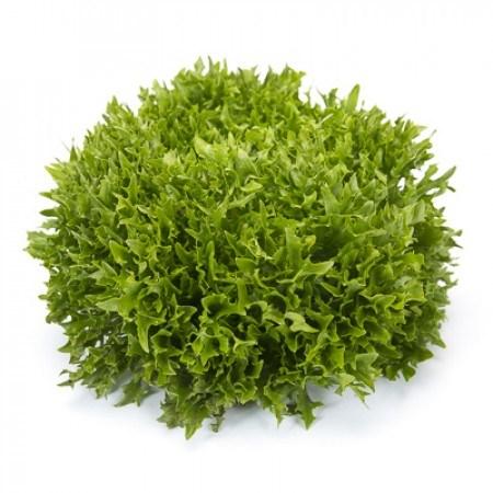Экзам Knox ™, семена салата саланова (Rijk Zwaan / Райк Цваан) - фото 7069