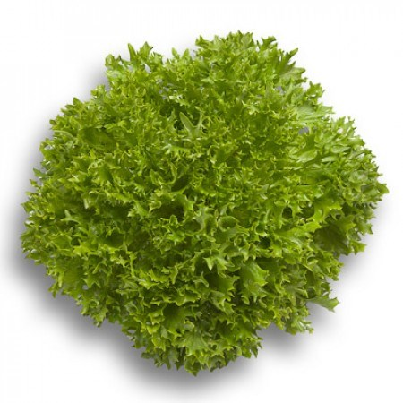 Экспертайз, семена салата саланова с рассеченным листом (Rijk Zwaan / Райк Цваан) - фото 7076