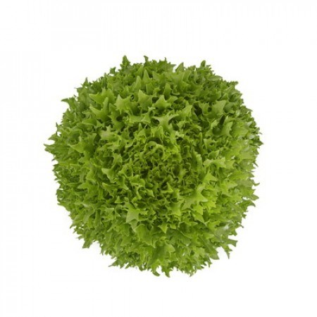 Экстемп, семена салат саланова с рассеченным листом (Rijk Zwaan / Райк Цваан) - фото 7079