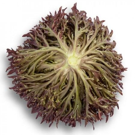Триплекс, семена салата хрустящего с сильно рассеченным листом (Rijk Zwaan / Райк Цваан) - фото 7089