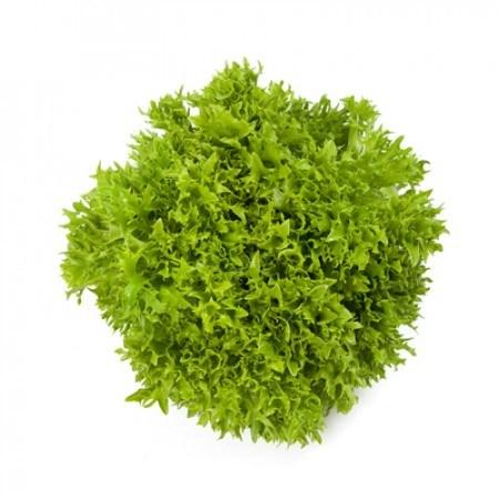 Экспириенс, семена салата хрустящего с сильно рассеченным листом (Rijk Zwaan / Райк Цваан) - фото 7093