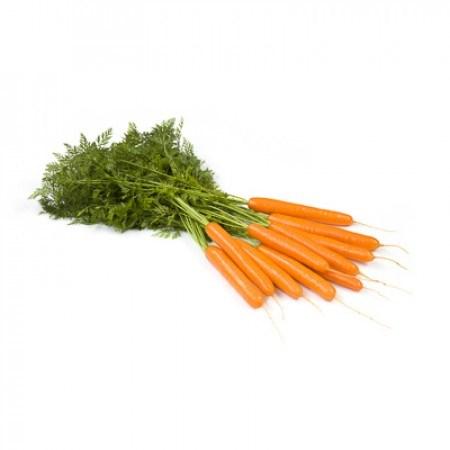 Джерада F1, семена моркови (Rijk Zwaan / Райк Цваан) - фото 7326