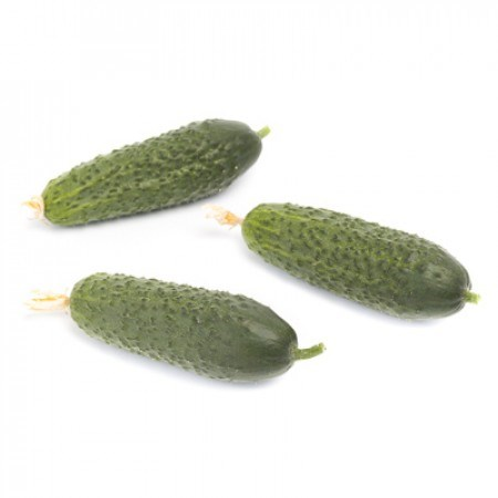 Кибрия F1, семена огурца партенокарпического (Rijk Zwaan / Райк Цваан) - фото 7345