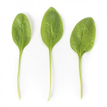Меркат F1, семена шпината (Rijk Zwaan / Райк Цваан) - фото 7372