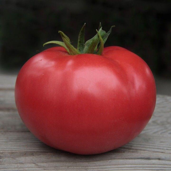 Этери F1, семена томата индетерминантного (Seminis / Семинис) - фото 7470
