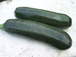 Диамант F1, семена кабачка (Seminis / Семинис)