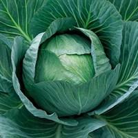 Аммон F1, семена капусты белокочанной (Seminis / Семинис)