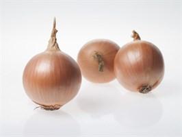 Беннито F1, семена лука репчатого (Seminis / Семинис)