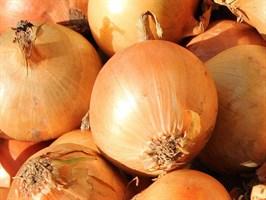 Кэнди F1, семена лука репчатого (Seminis / Семинис)
