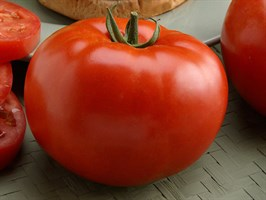 Биг-Биф F1, семена томата индетерминантного (Seminis/Семинис)